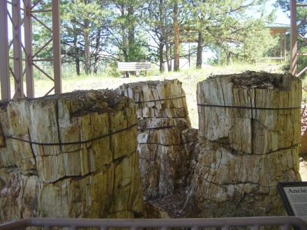 Petrified Tree Stumps, Florissant Fossil Beds National Monument